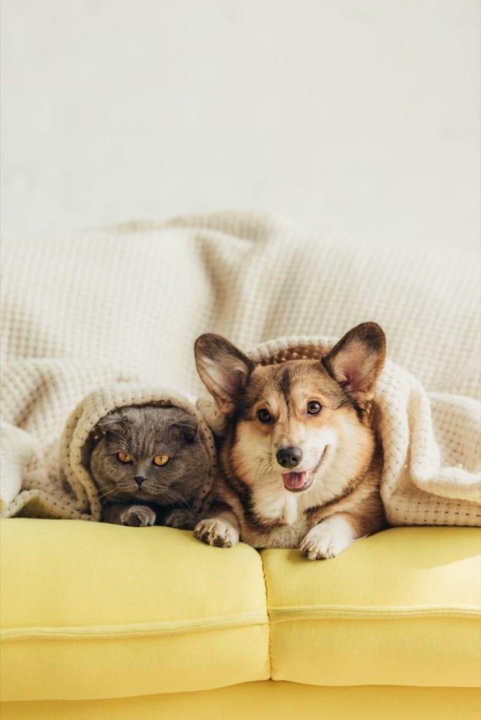 Dog & Cat cuddling on a sofa